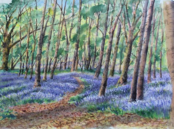 Bluebells Watersfield